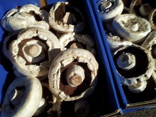 mushrooms on of the healthy foods to lose weight